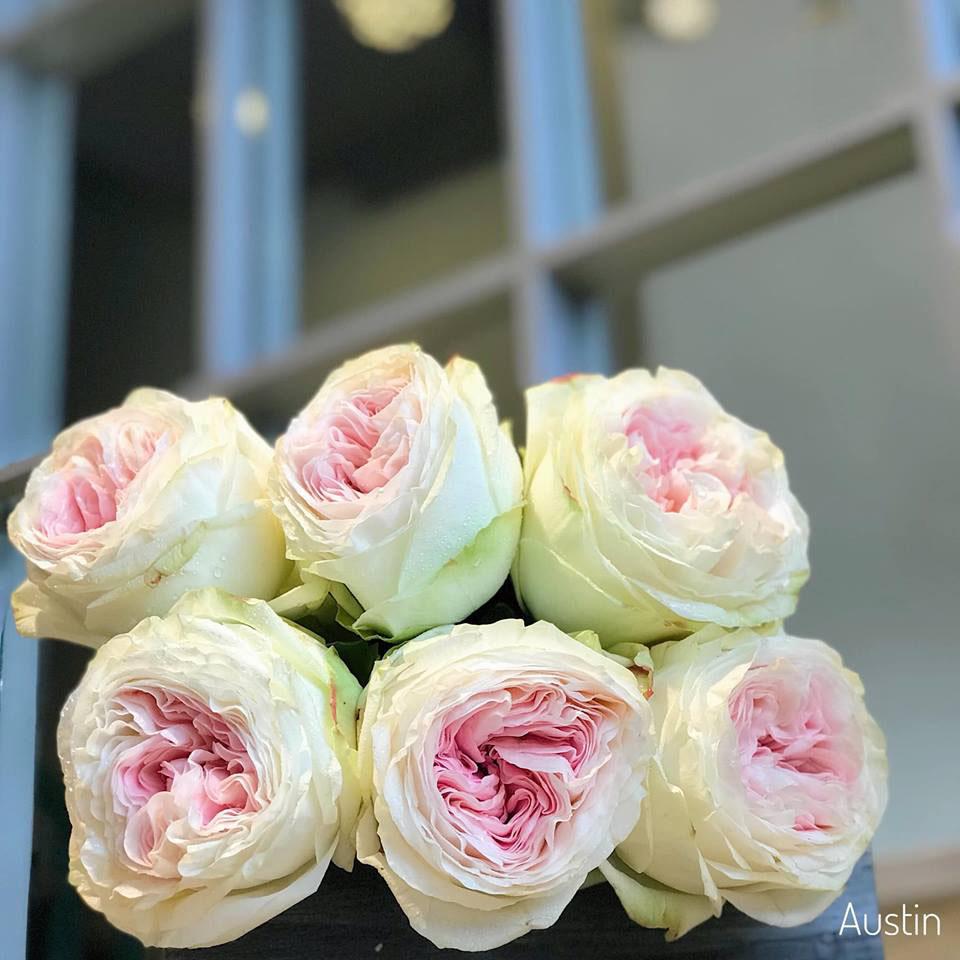 hoa hồng nhập