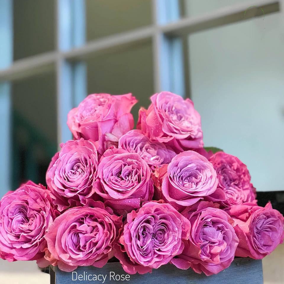 Hoa hồng nhập ecuador delicay rose