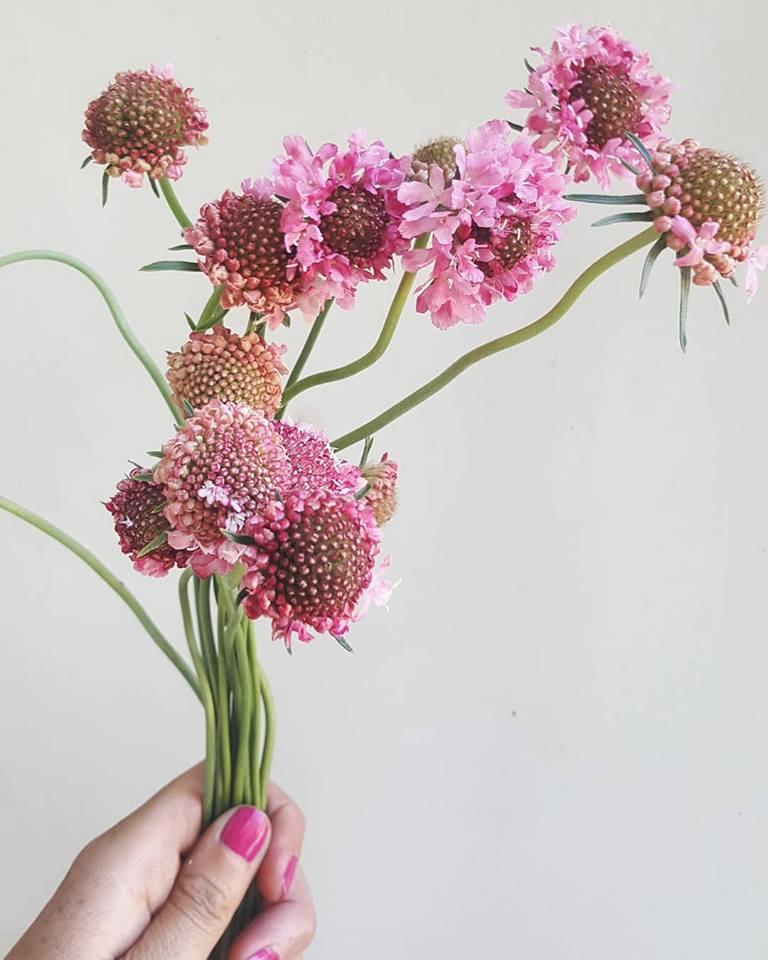 Hoa mới du nhập vào thị trường Việt Nam – Hình ảnh hoa đẹp
